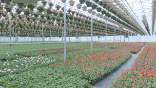 Greenhouses struggling during stay-at-home order