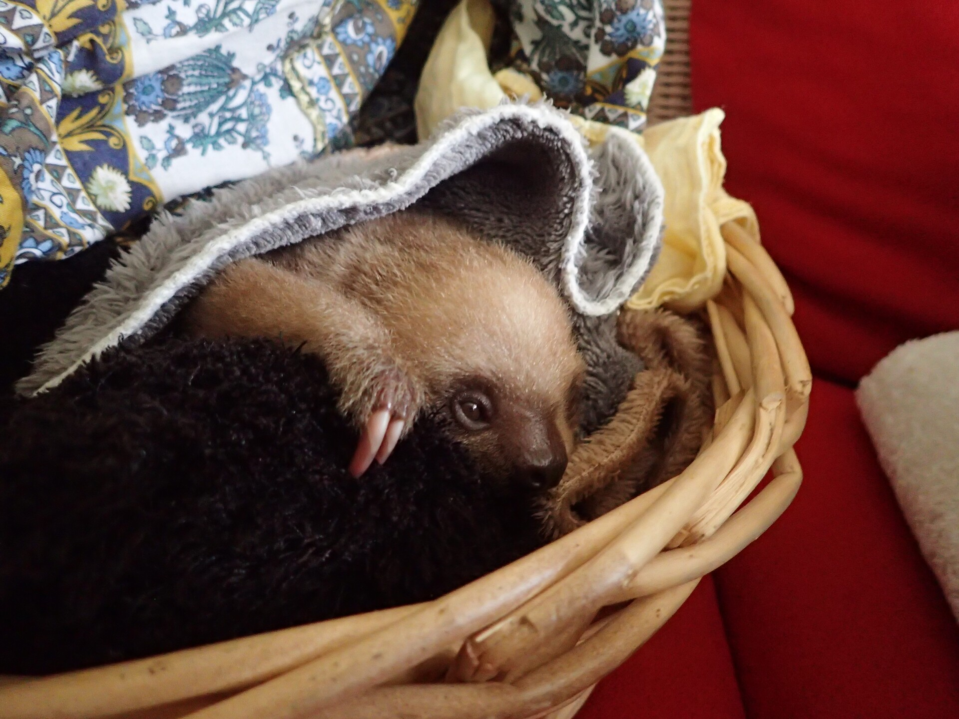 Baby Sloths (4).JPG