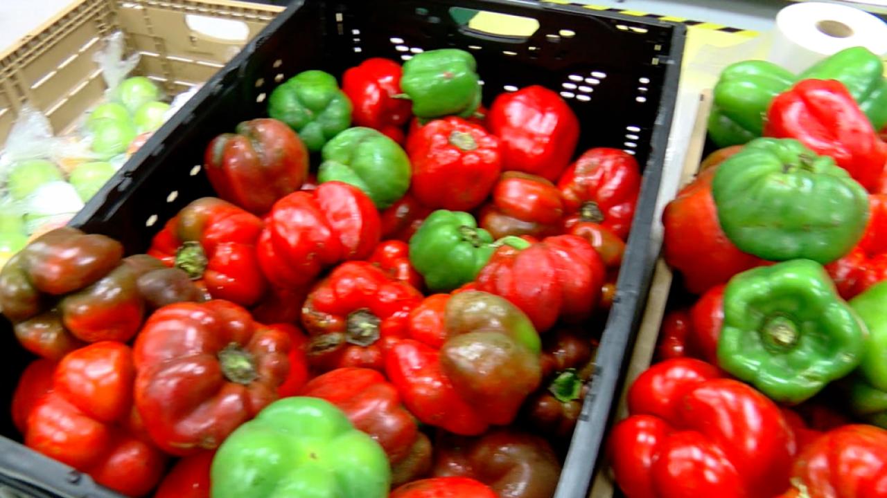 Tampa Bay Harvest