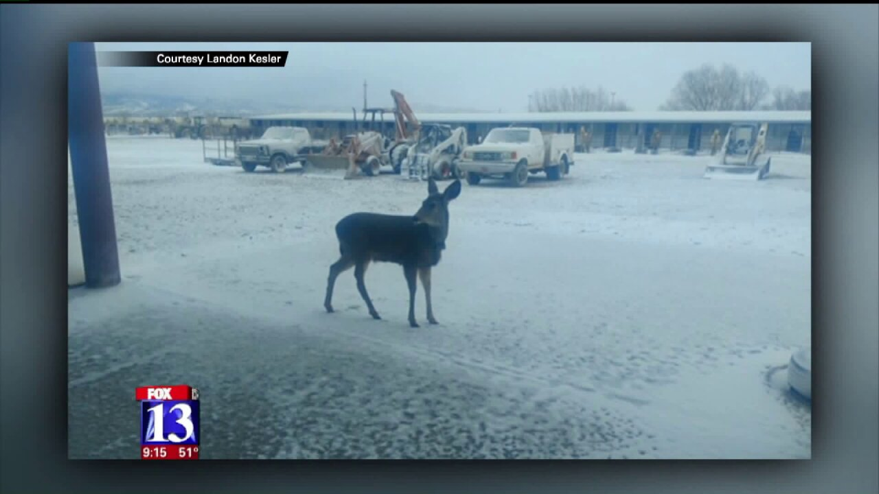 Utah wildlife officials relocate 'Jerky' the deer again after animal bonds with another family