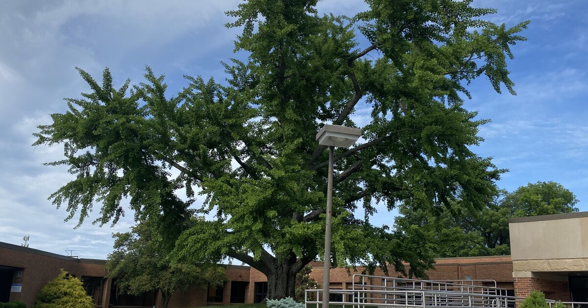 Group worked fast and saved historic tree