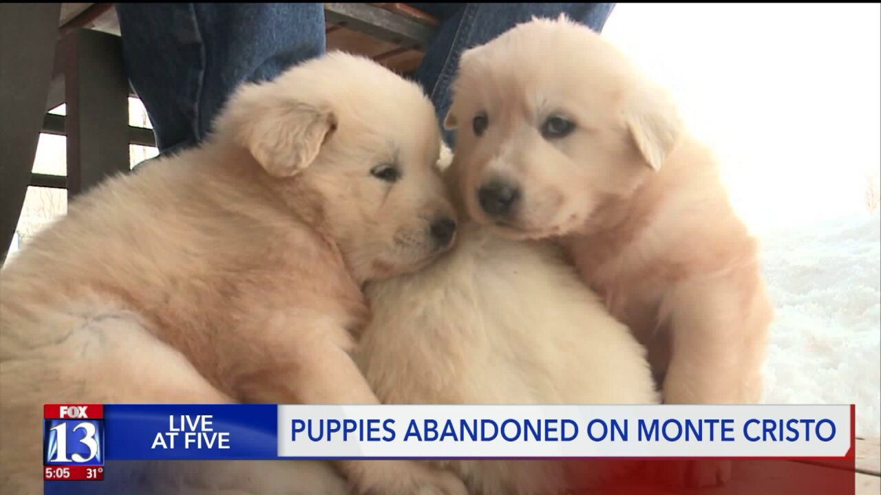 Snowmobilers rescue three lost puppies on Utah mountaintop