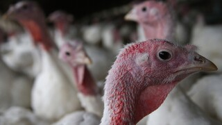 """Where did the phrase """"talking turkey"""" come from?"""