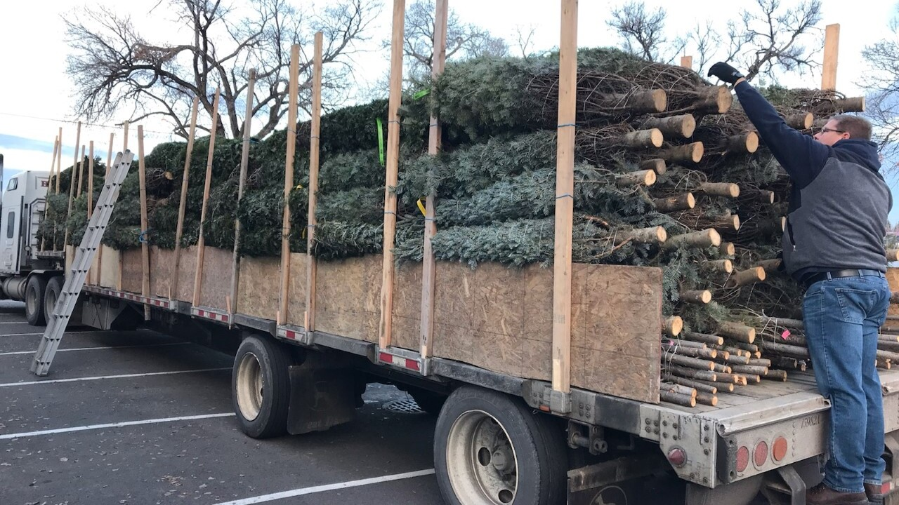 Missoula's Lion Club Gives Back During Christmas Tree Sale