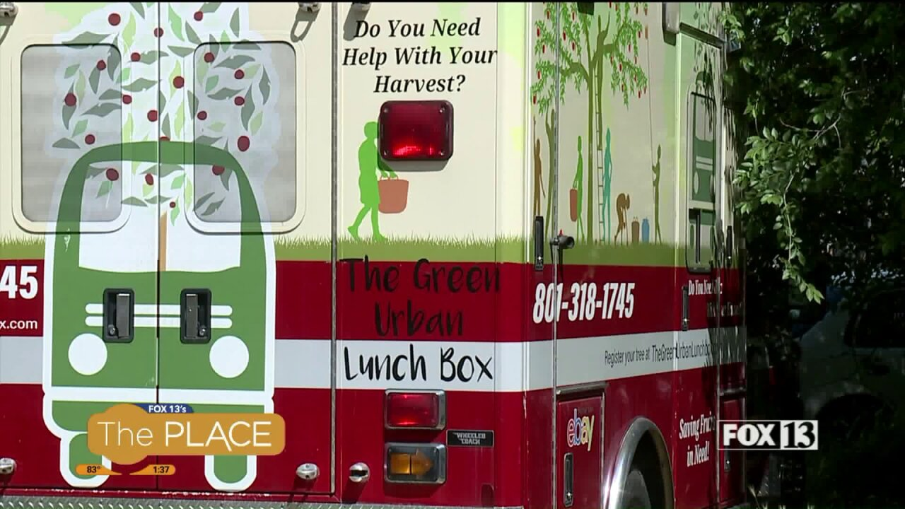 Zero Hunger-Zero Waste Hero: Green Urban Lunchbox