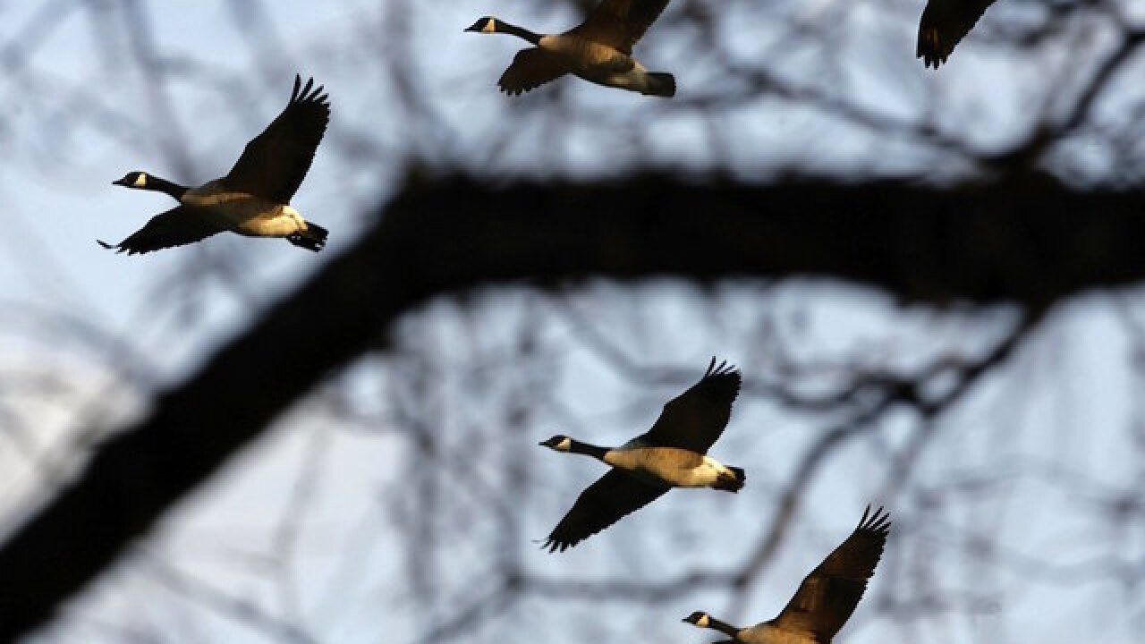 Geese poop on Disneyland guests, hitting 17 people from air