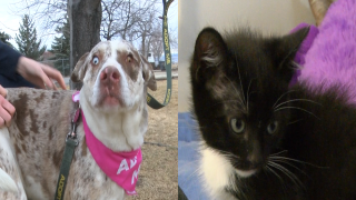 Fundraiser to determine if cats or dogs make better pets
