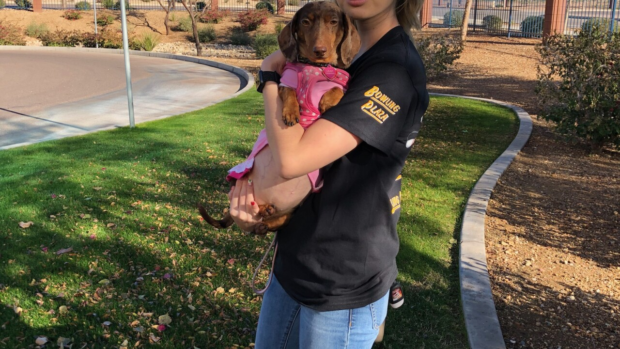 A Las Vegas family is heartbroken over the loss of their beloved dog Leah but question if more could have been done to prolong her life after a series of extensive tests.