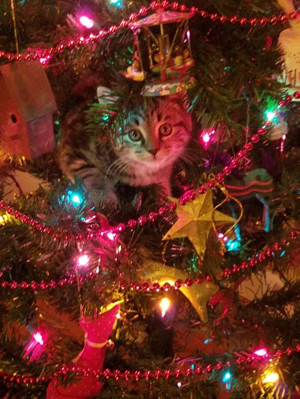 Santa Pets sent by Laura Brand.jpg