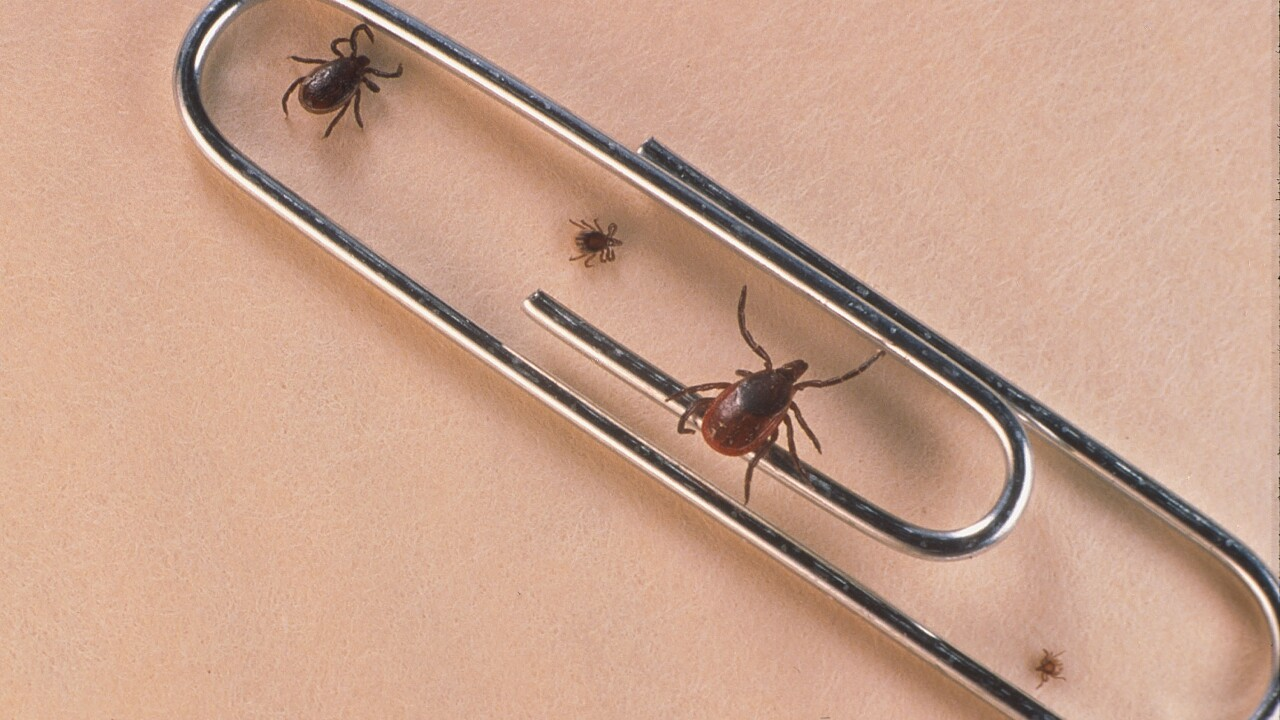 Ticks compared to paper clip