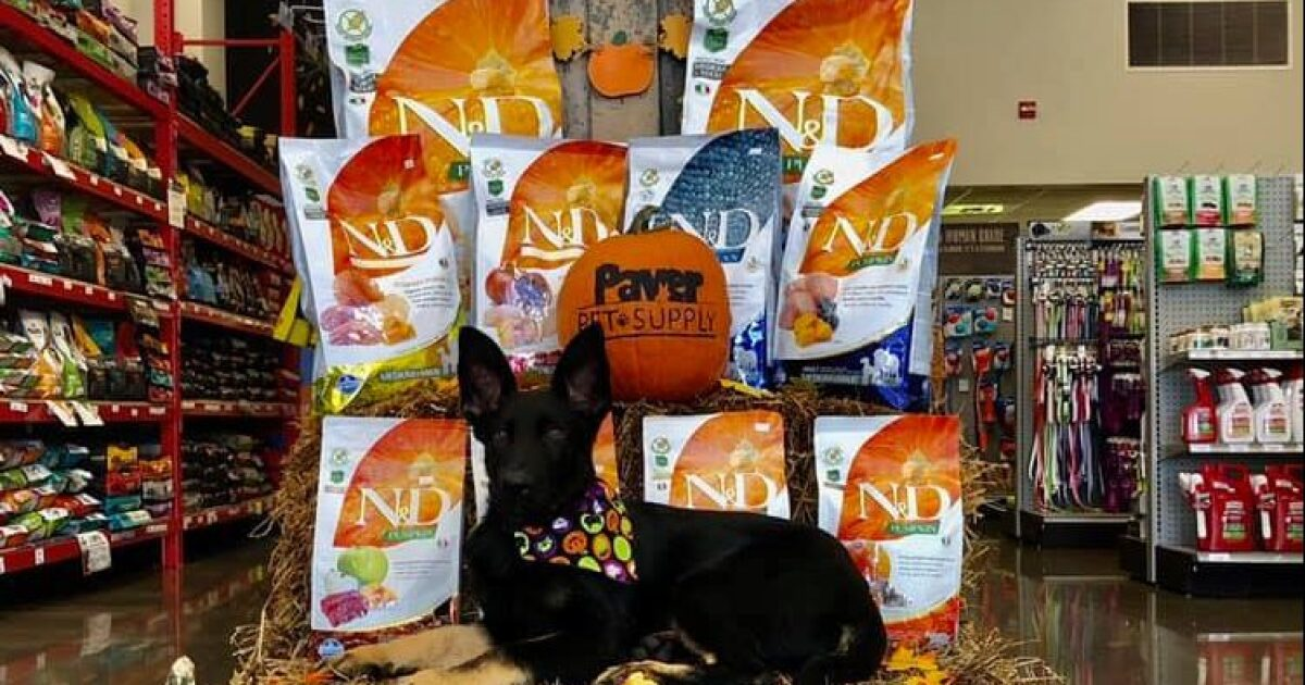 Sit, stay, and be spooky at Paver Pet Supply's Dog Halloween Party