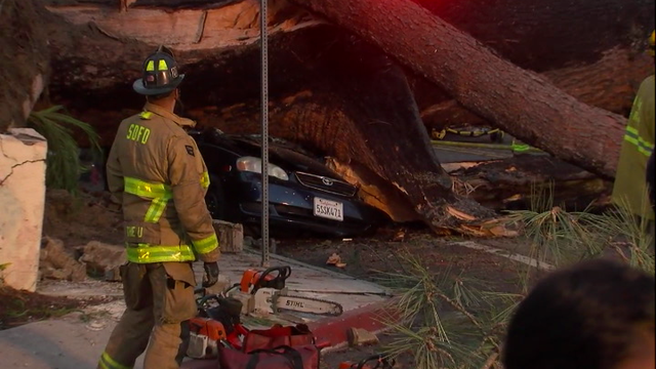 Rescue underway after tree falls on car in PB