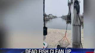 VIDEO: Rockport man helps clean up canals with dead fish