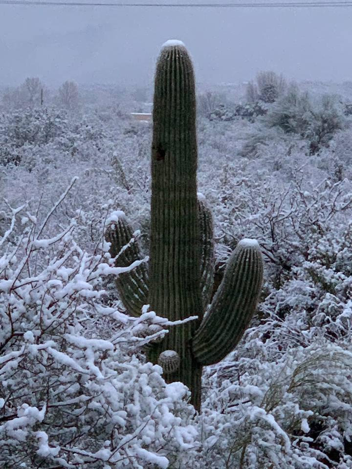 Snow - SE Tucson - Kelly Rhodes.jpg