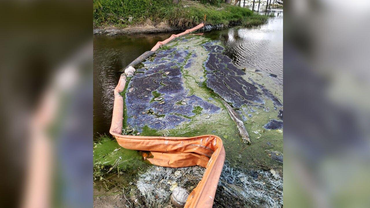 Algae near Lake Clarke Shores on May 20, 2021