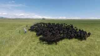 Montana Ag Network: Ranchers work to improve soil health