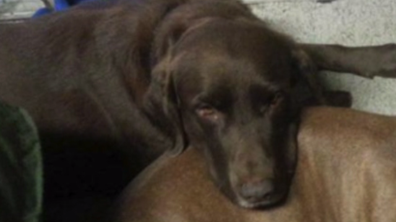 Three paws ripped off Anderson family dog; police search for person responsible