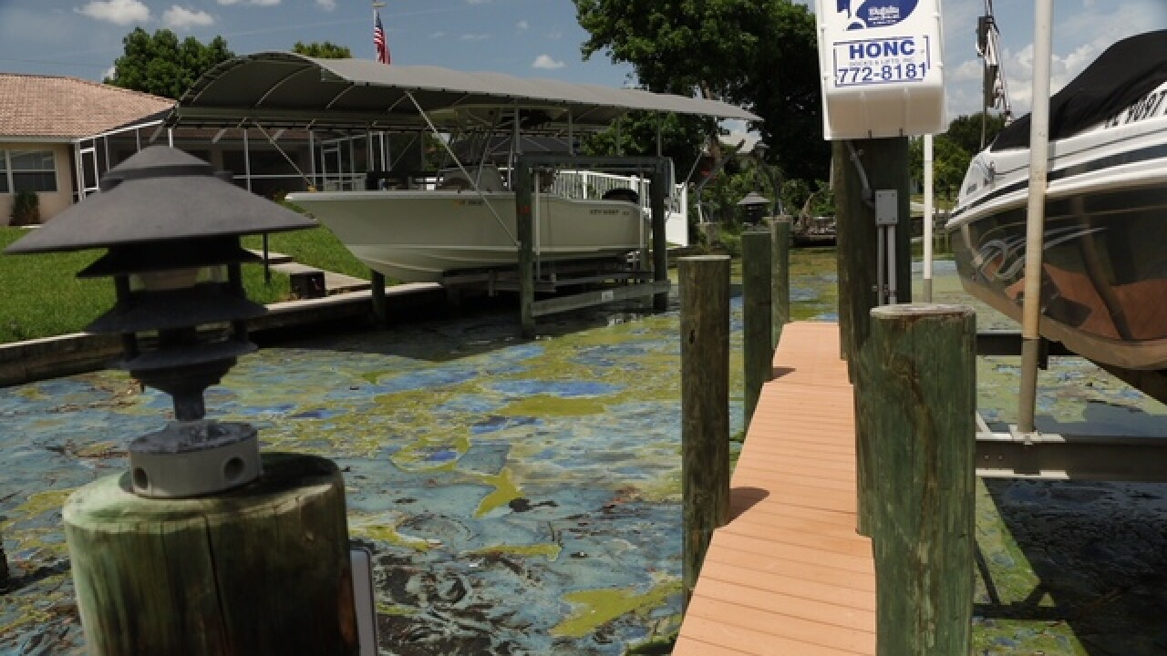 Gov. declares State of Emergency over algae