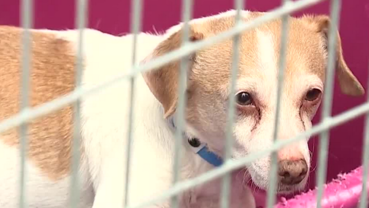 Hundreds of lost pets after July 4 fireworks
