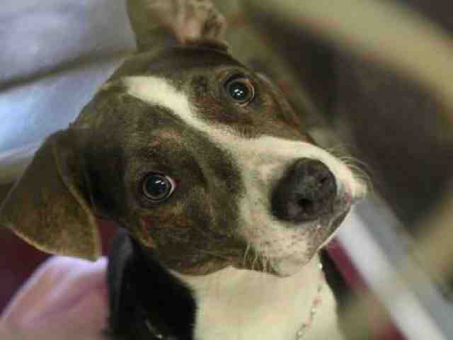 Adoptable pets from Maricopa County Animal Care and Control and Arizona Humane Society (10/11)