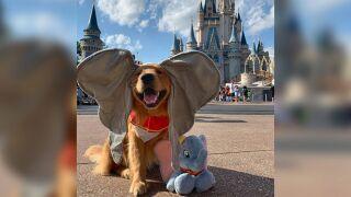disney world dog.jpg