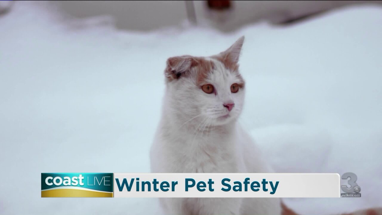 Cold weather safety tips for pets on Coast Live