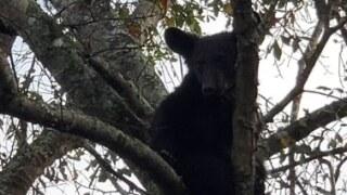 bear in patterson 1.jpg