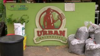WYS Urban Naturalist.PNG