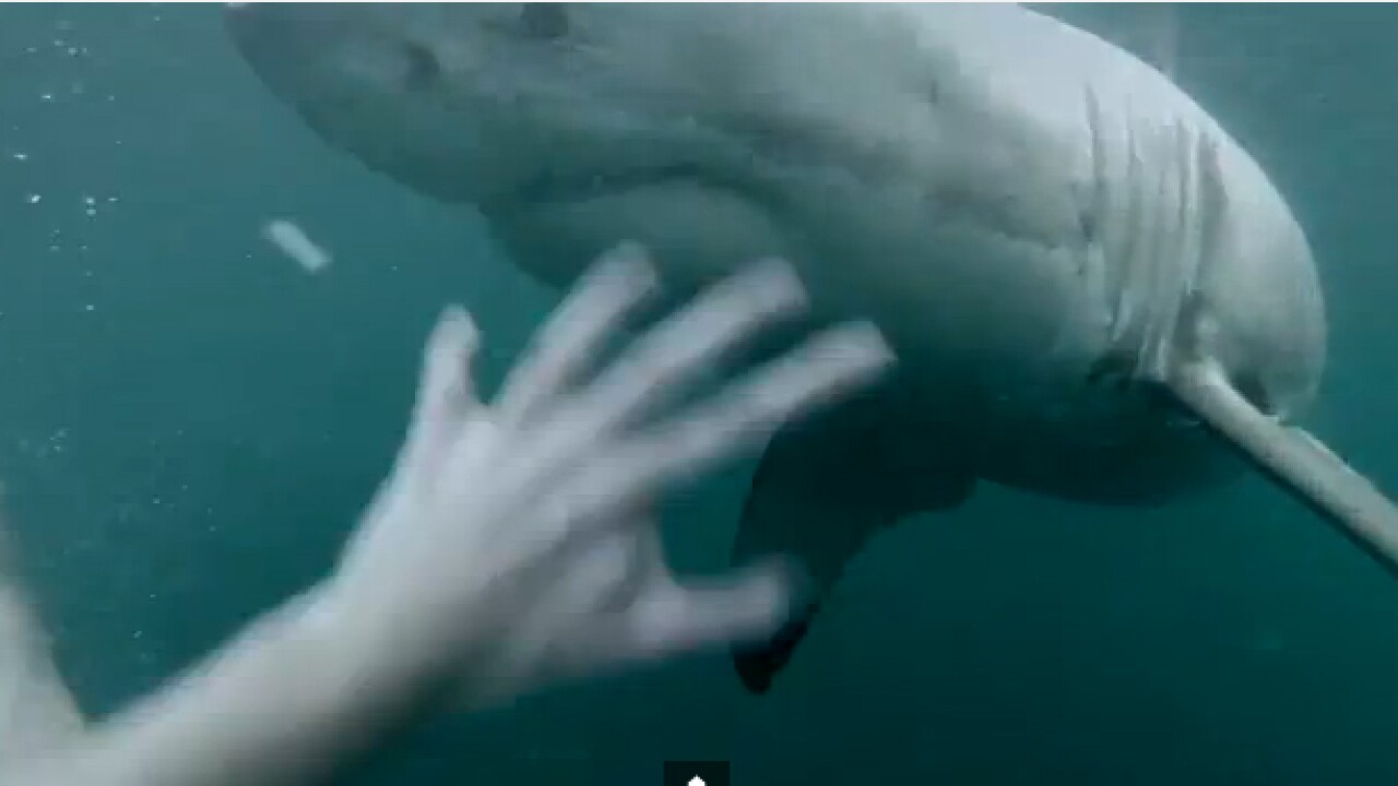 Video: Man wearing GoPro has terrifying shark encounter inAustralia