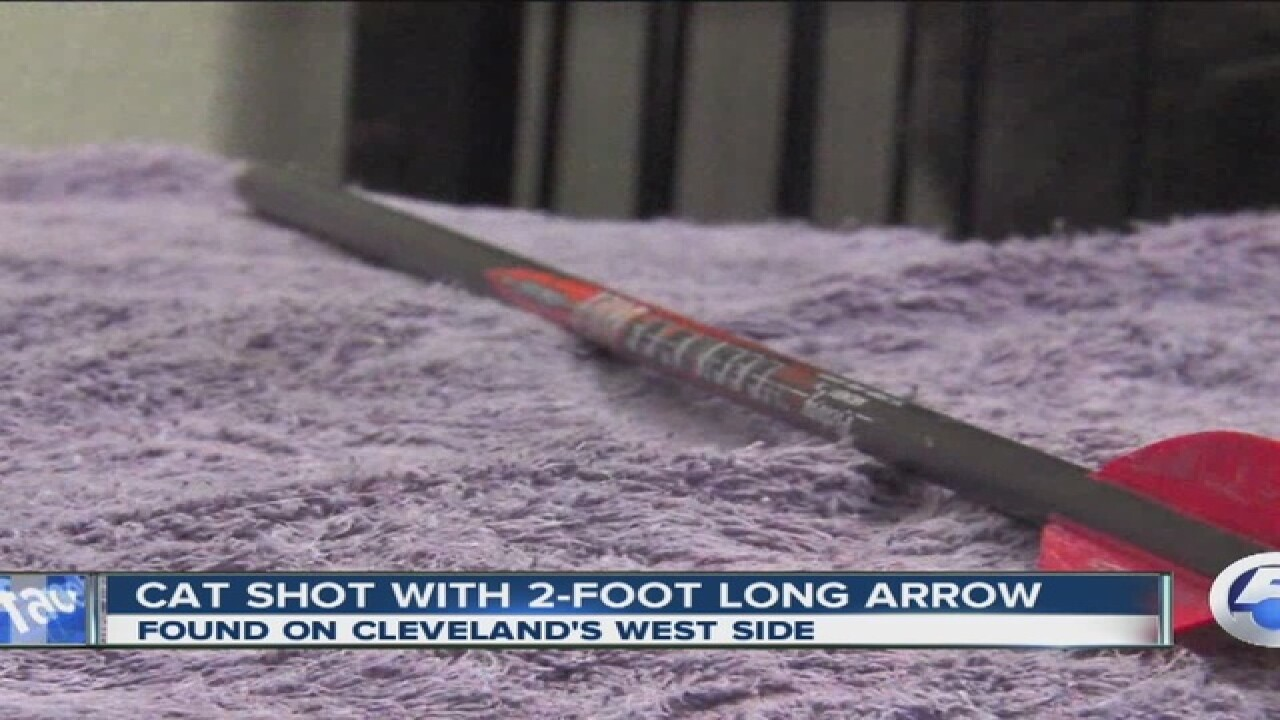 Cat shot by arrow on Cleveland's west side