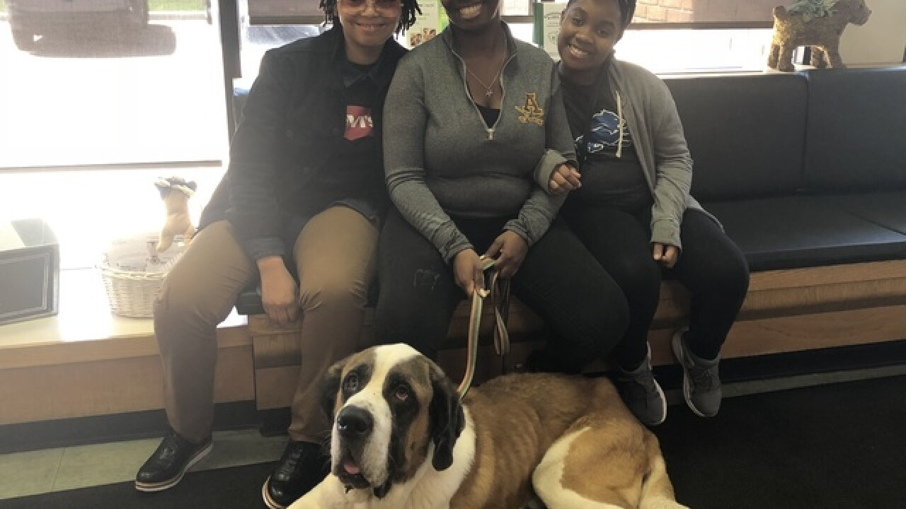 Detroit Dog Rescue asks for help treating St. Bernard found trapped in basement