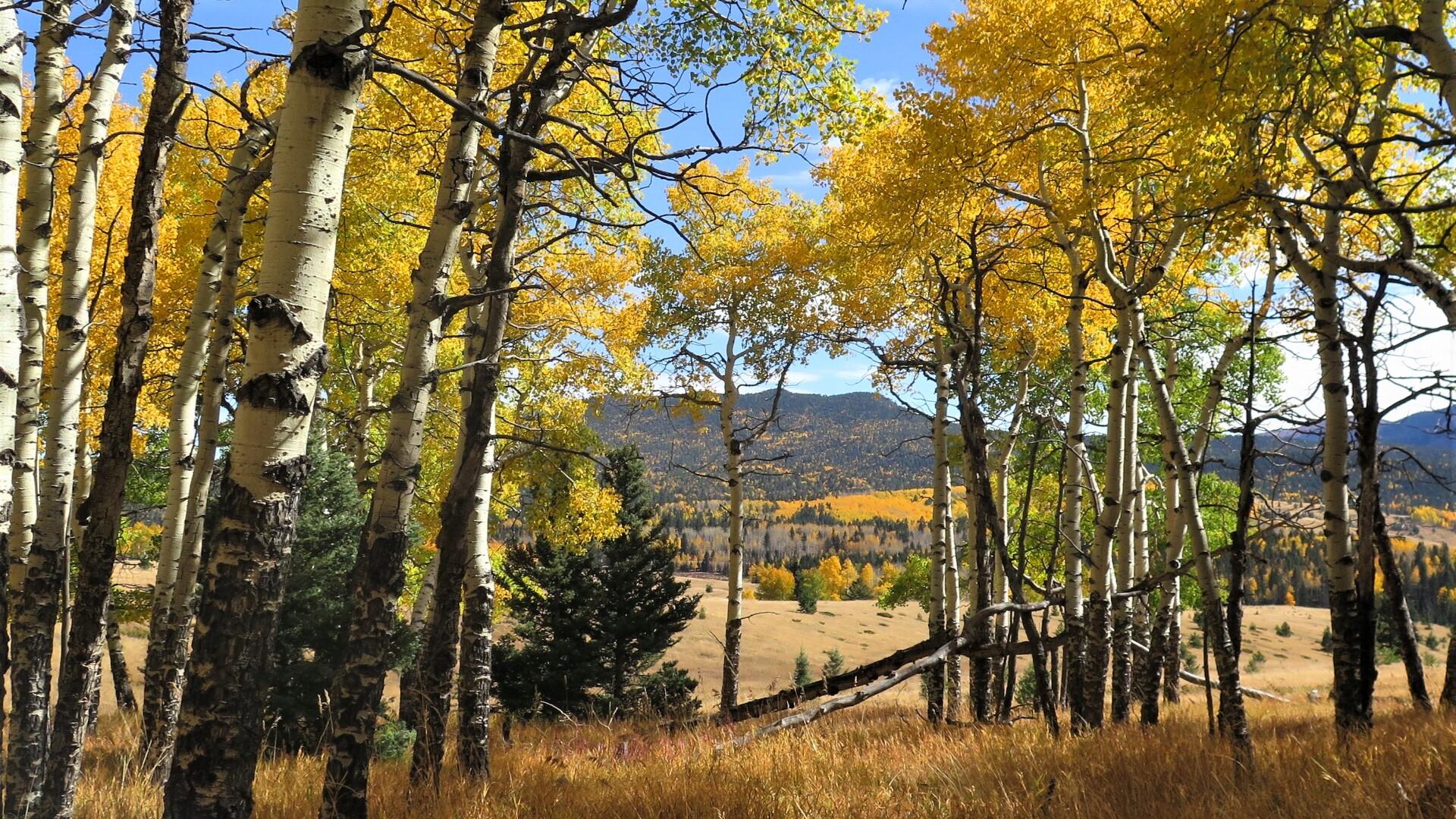 2Mueller State Park Cheeseman Trail Bonnie Summer 3.JPG