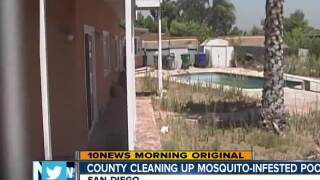 County cleaning up mosquito-infested pools