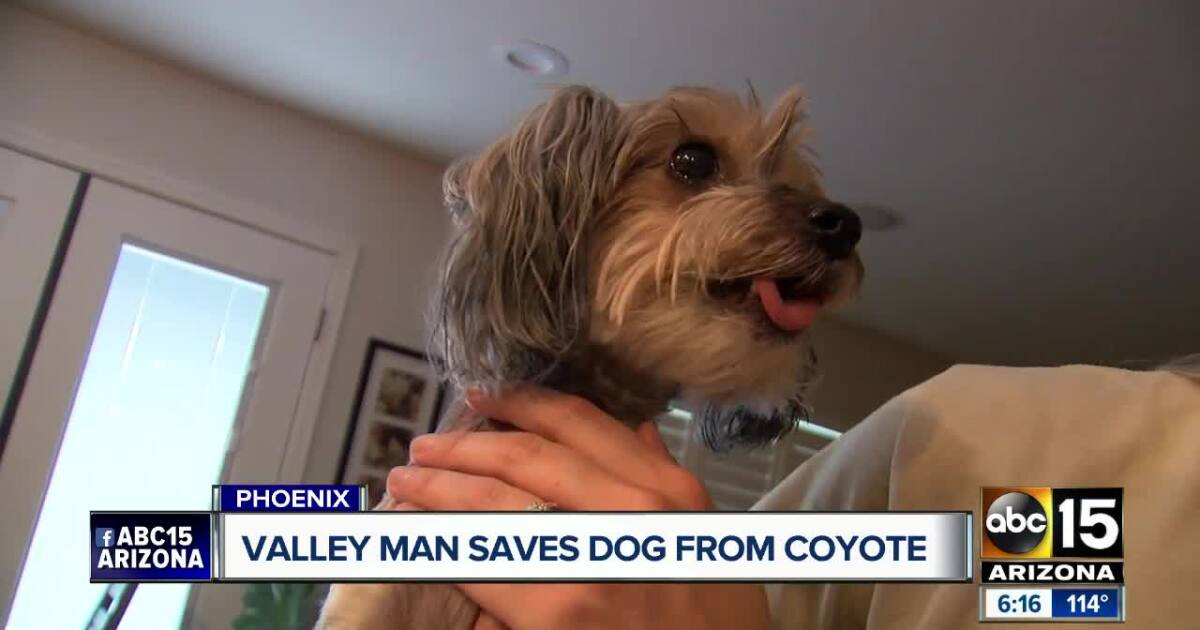North Phoenix family saves dog from coyote attack