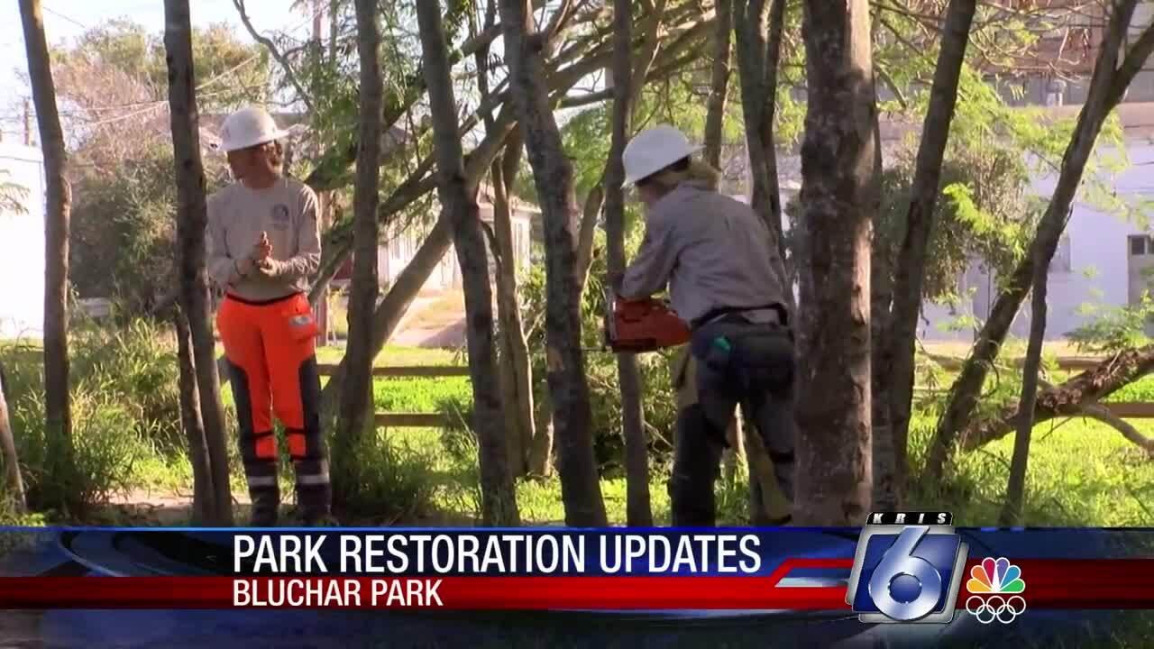 Blucher Park restoration work