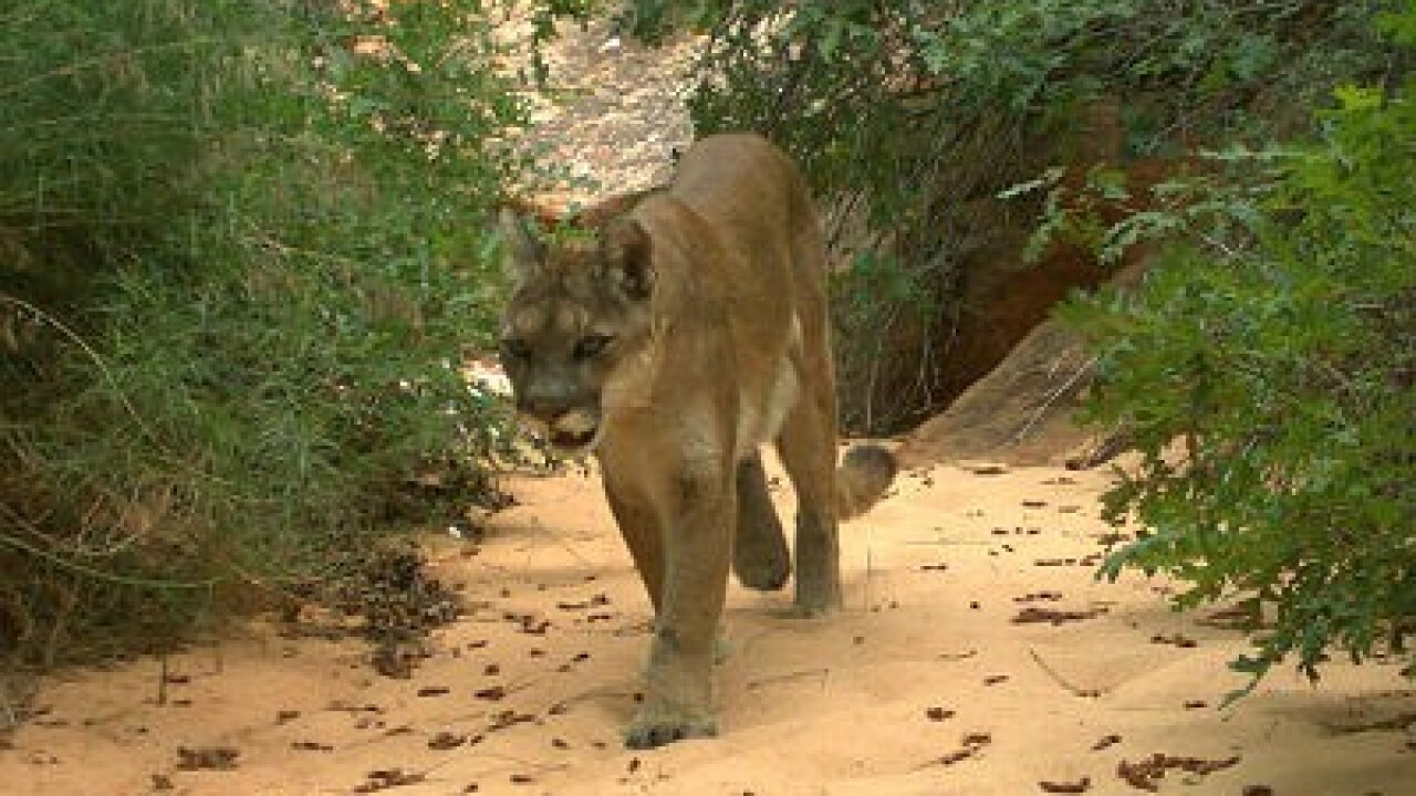 4-year-old boy attacked by mountain lion at San Diego nature preserve