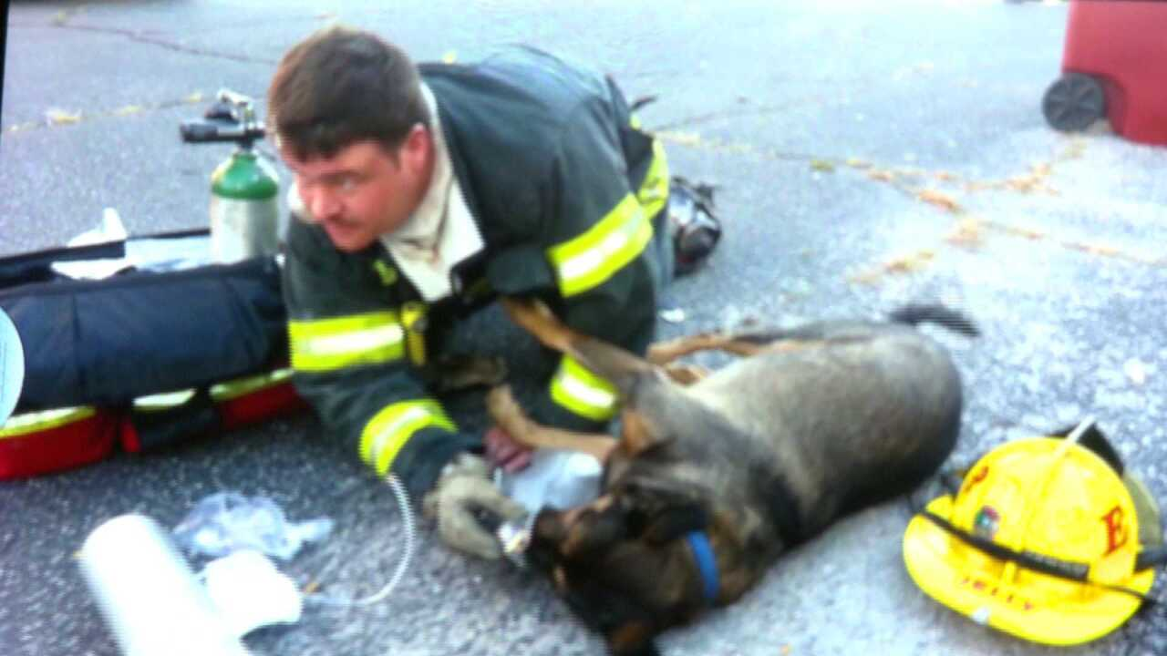 Firefighter, paramedic's split-second decision saves dog pulled from burning Petersburghome