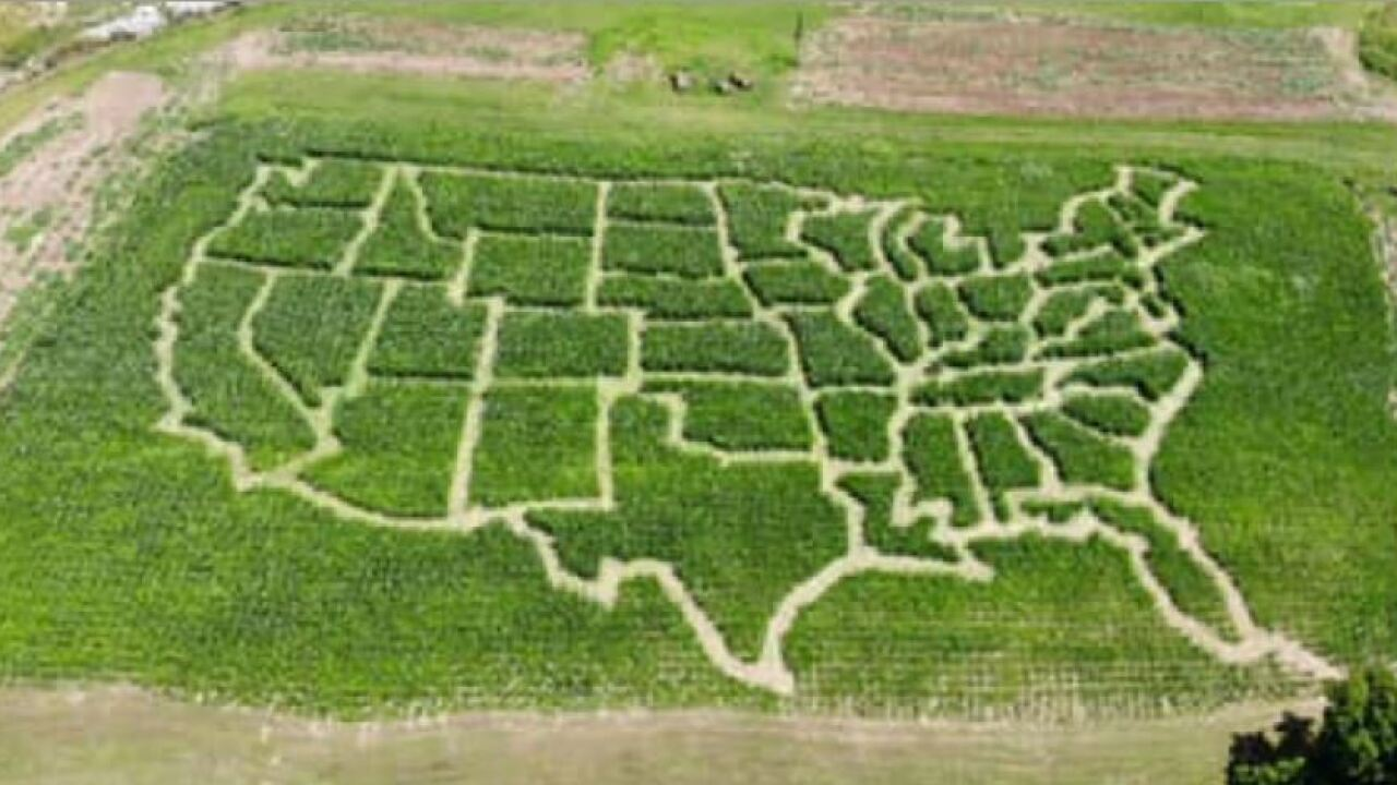 Virginia farmer turns corn field into USA map corn maze