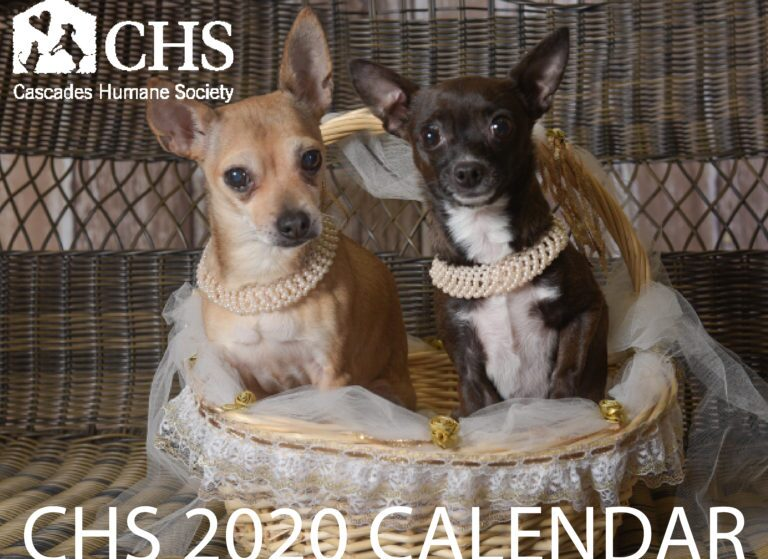 2020 MODEL SEARCH FOR THE 2021 CHS CALENDAR