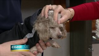 New virtual fostering opportunities for pet lovers on CoastLive