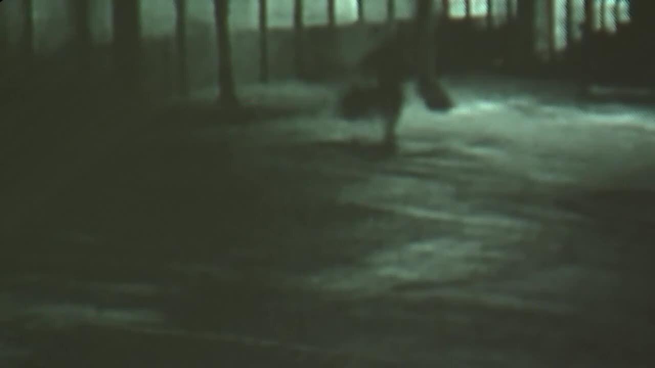 surveillance video of bird thief at The Birdhouse in Davie