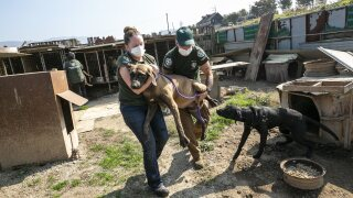 South Korea Dog Meat Farm 17 Rescue