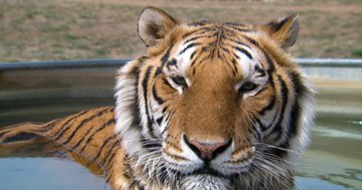 Serie Tiger King