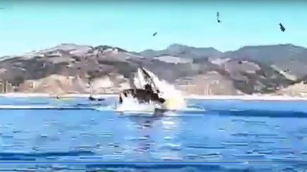 Kayakers in California lucky to be alive after whale capsizes boat