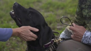 FWC are utilizing dogs to locate invasive Burmese pythons.