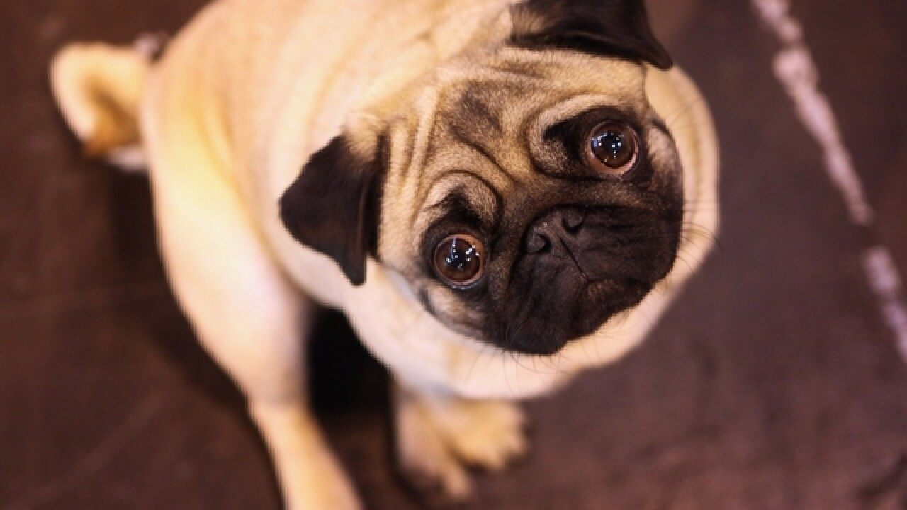 UK requiring owners to 'microchip' their dogs