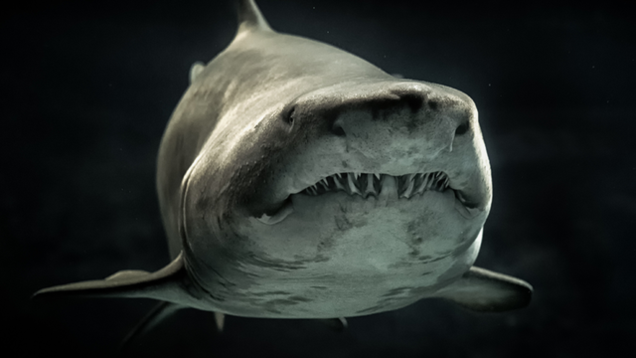 Shark attacks in America: Here's your guide