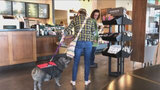Pig in Starbucks