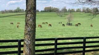 HorseCountry1.jpg