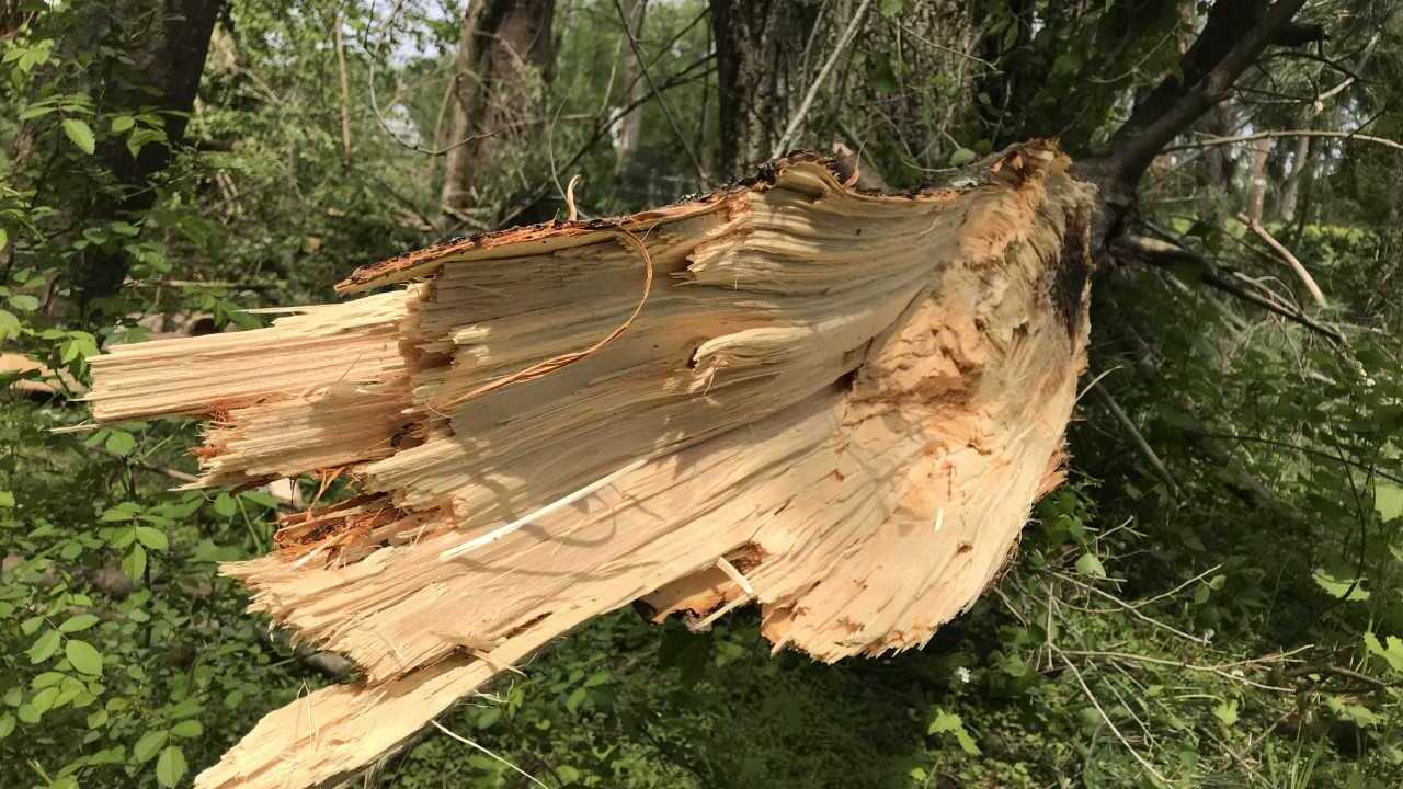 Monkton storm damage.jpeg